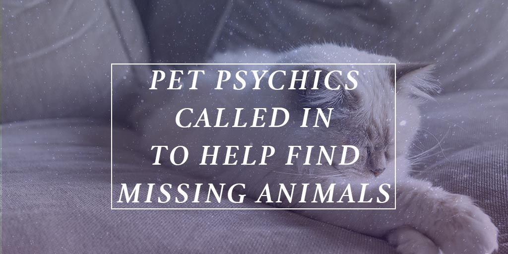 Pet psychics called in to help find missing animals